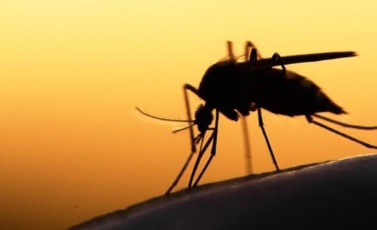 WeCare-malaria-mosquito